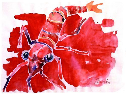 """Mascha Düben, """"Krabbe in Rot"""" Meer Tier rot Krebs Wasser Fisch Meer Tier"""