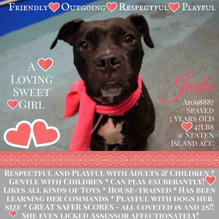 JADA – A1098887 (ALT ID A1102422)Rescue Only, needs foster! All costs are covered, which means you must go through a rescue partnered with the shelter to foster or adopt. You must contact the Help Desk of this page by Emailling them @ helpdogs@urgentpodr.org. They will help and guide you with which rescue applications to fill out. They know which rescues are pulling. They will make the process go as quick and as smooth as possible