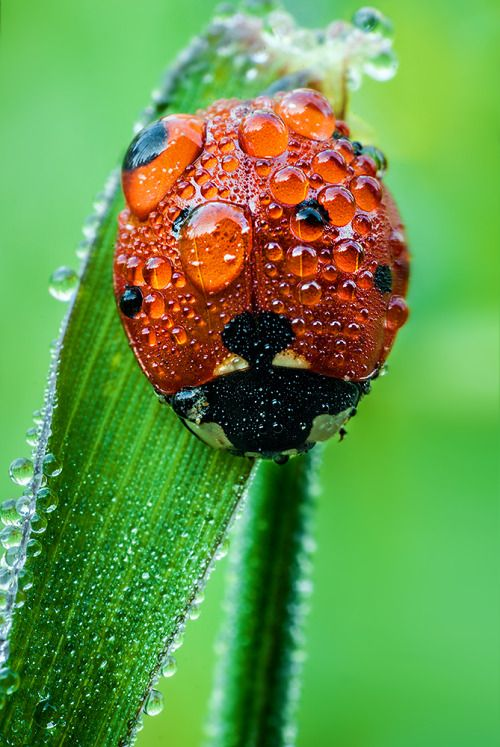 In the rain- I normally don't like lady bugs, but this is really pretty!
