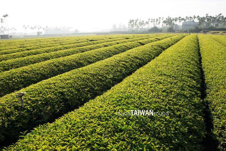 Minjian Tea Farm 名間純喫茶茶園
