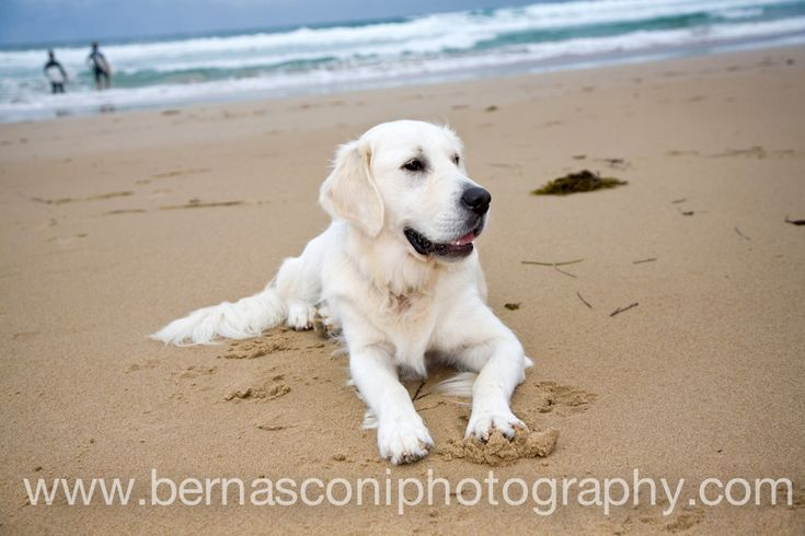 Beach puppy...by Christine Bernasconi