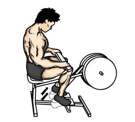 Seated-Calf-RaisesStands Calves, Seats Calves, Calves Rai, Calf Raises, Seated Calf Raised