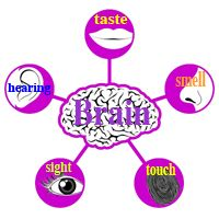 taste poem- the tongue-five senses poems- science lessons