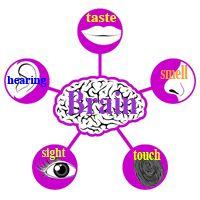 taste poem- the tongue-five senses poems- science lessons