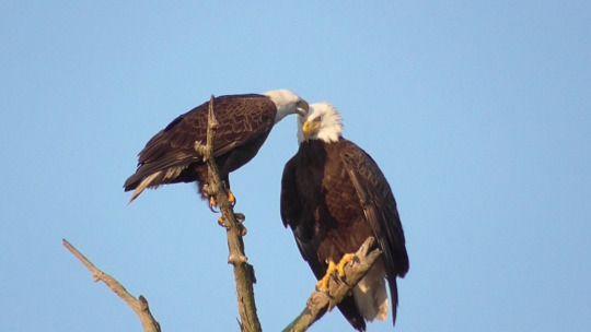 Eagle Cam - Blog