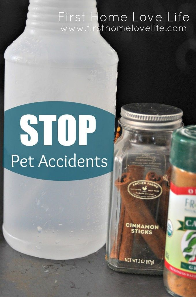 Get rid of pet accidents for good! #diy