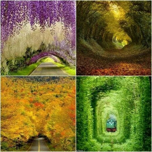 Mother nature makes better tunnels