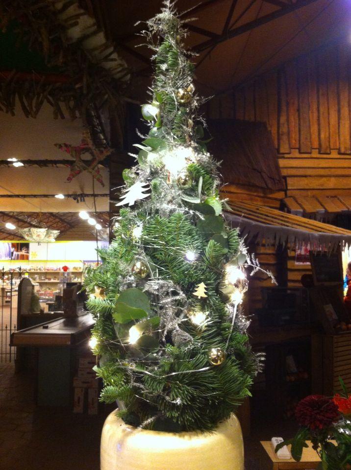 Kerstboompje eucalyptus, blauwe zilver spar, asparagus