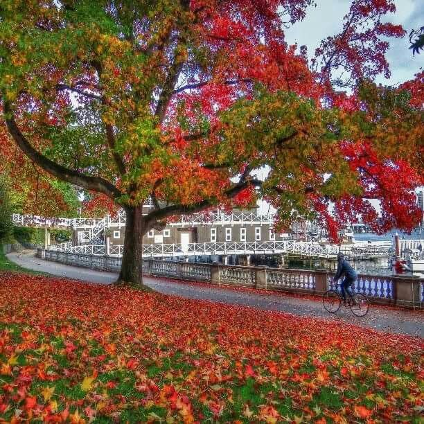 Beautiful fall colors in Vancouver Stanley Park by the rowing club