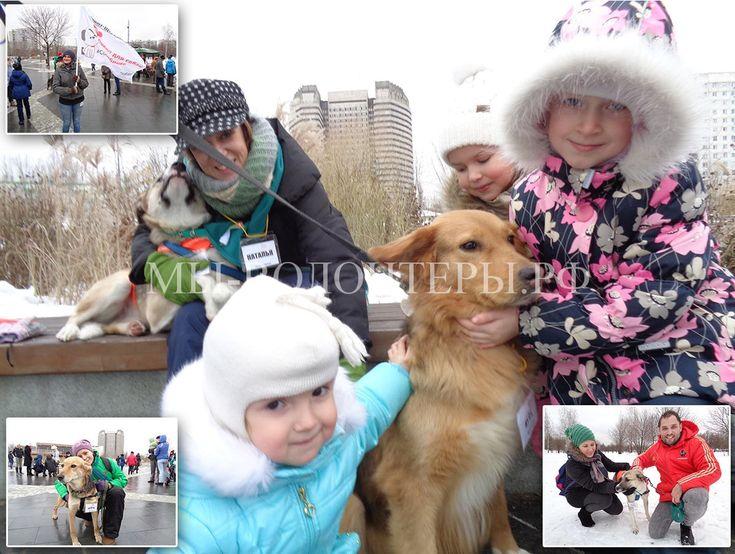 """Успешно прошла выставка """"Собака-согревака"""" приютов Щербинка, Красная Сосна и Бирюлево  http://xn----dtbjxcjfbus6gj.xn--p1ai/volunteers/%d1%83%d1%81%d0%bf%d0%b5%d1%88%d0%bd%d0%be-%d0%bf%d1%80%d0%be%d1%88%d0%bb%d0%b0-%d0%b2%d1%8b%d1%81%d1%82%d0%b0%d0%b2%d0%ba%d0%b0-%d1%81%d0%be%d0%b1%d0%b0%d0%ba%d0%b0-%d1%81%d0%be%d0%b3%d1%80%d0%b5/ В субботу, 26 ноября 2016, успешно прошла вы"""