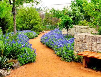 49 best shade plants for austin tx zone 8 images on pinterest texas gardening shade plants for Austin nurseries garden centers