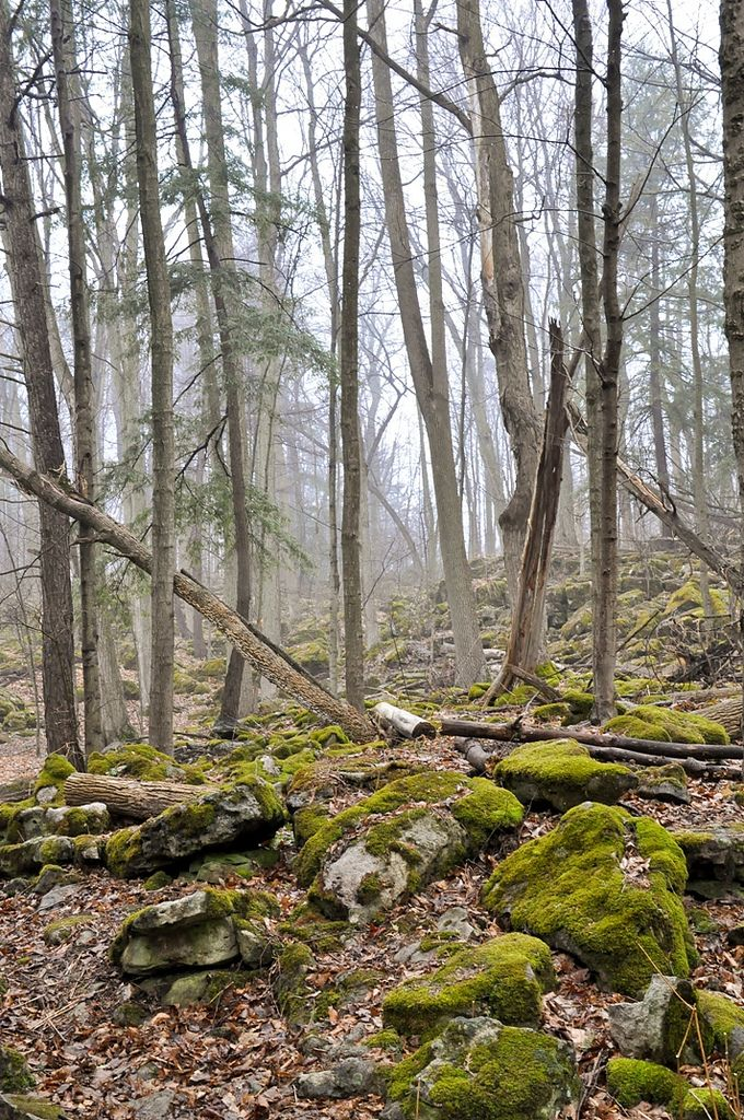 The woods at Crawford Lake Conservation Area near Milton, Ontario on a foggy, early spring day.