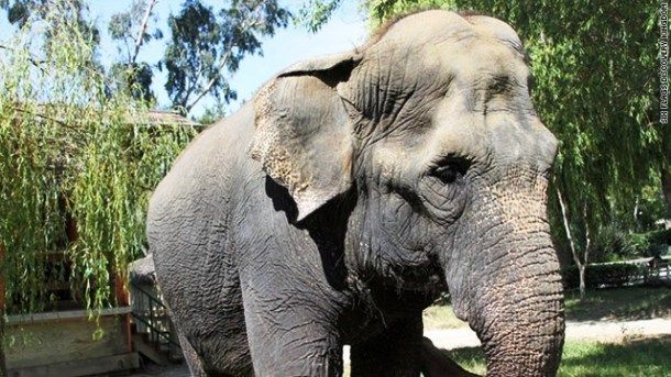 The average life span for an elephant in the wild is about 50 to 70 years. The oldest elephant ever was Lin Wang, an Asian elephant, who died on February 2003 at the age of 86.