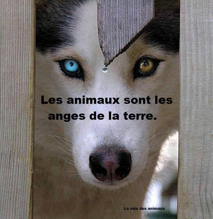 """""""Défendre les animaux et protéger la nature.  ~ Animals are the angels of the earth.  Defend animals and protect nature."""""""