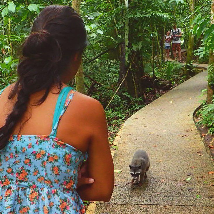 En este parque la atracción puede cambiar a tu contra. Los mapaches y los monos capuchinos saben que tú tienes comida y pueden insistir muchísimo hasta que la entregues. #ManuelAntonio #Vagabundavida #CostaRica by sarahkida