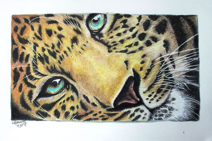 Mixed Media A3 Leopard 140915 https://www.facebook.com/Jinty-and-Rayne-265679376874551/