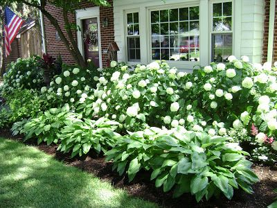 Hydrangeas and hostas  love this combo but I would try for a color hydrangea. Maybe blue or purple.