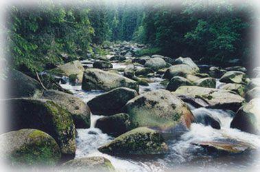 Povydří - - Naučné stezky v NP - Národní park Šumava