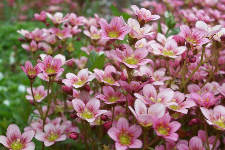 ¿Conoces cada uno de los tipos de Flores de Bach y las propiedades que tienen para cada uno de los 38 estados emocionales que el Dr. Bach determinó?