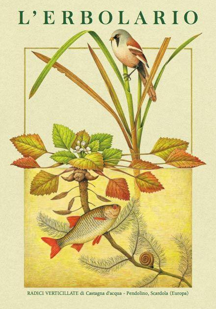 Calendario 2010: la bellezza delle piante che spuntano dai loro bulbi o dai tuberi o dai rizomi negli splendidi acquerelli di Franco Testa per l'Erbolario