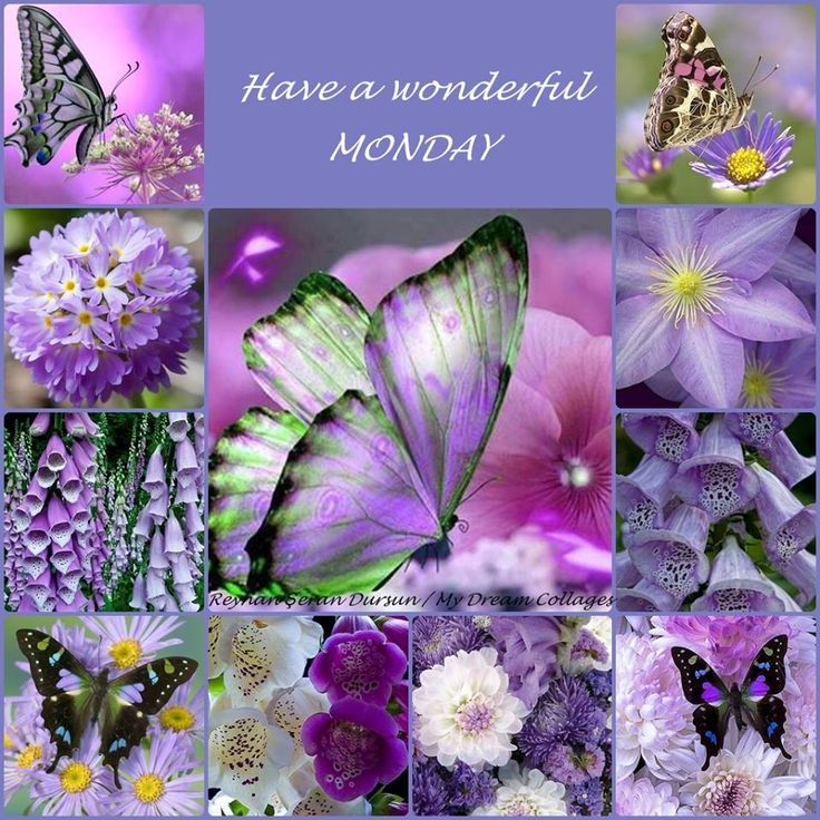 '' Have a wonderful MONDAY '' by Reyhan Seran Dursun