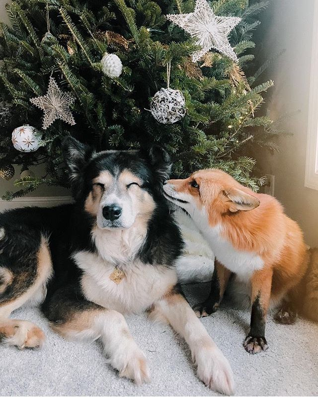 •Juniper the Fox and Moose da doggo, It's that time of the year