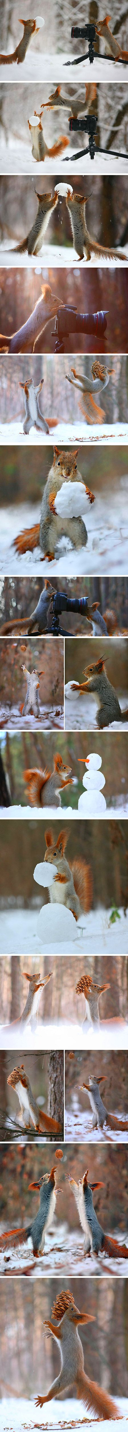 .Talented Russian nature photographer Vadim Trunov has had close encounters with squirrels before, but this is the first time we've seen his photos of squirrels playing or shooting photos of each other! The photographer recently published some photos he's captured of squirrels that seem to be building snowmen or playing volleyball with nuts.