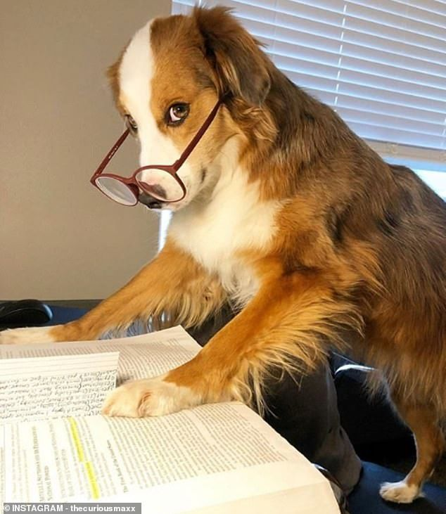Dogsworkingfromhome Trends As People Share Snaps Of Pets And Laptops In 2020 Dog Training Dog Brain Dogs