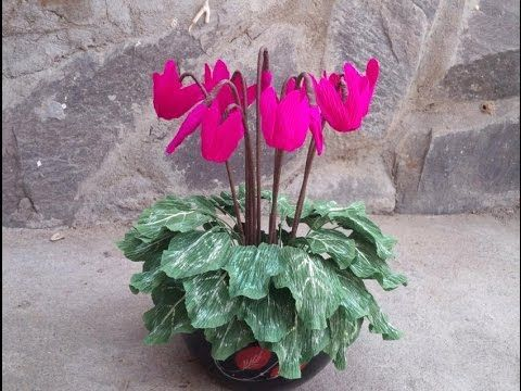 How To Make Cyclamen Flower From Crepe Paper - Craft Tutorial - YouTube