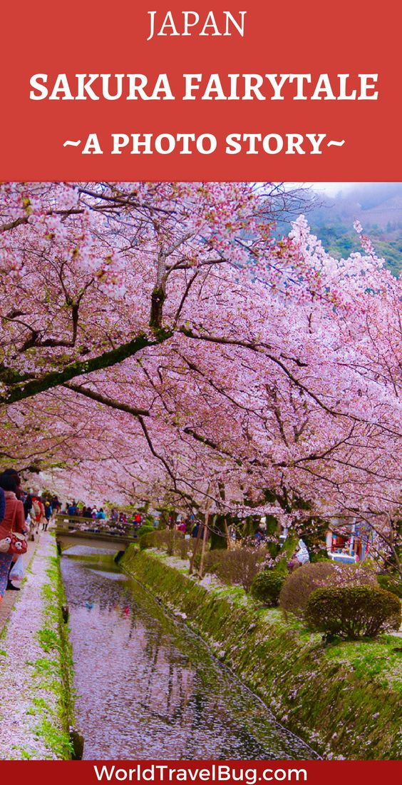 Sakura, Japan a pure fairytale and one of the most beautiful things I have ever seen- 35 photos that will make you want to visit Japan in the spring time