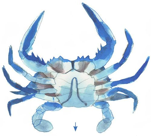 A Dummy's Guide to Crabs