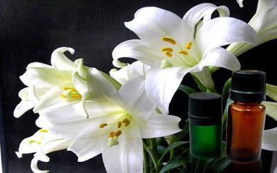 mucize iksirler: Zambak Yağının faydaları ve kullanımı