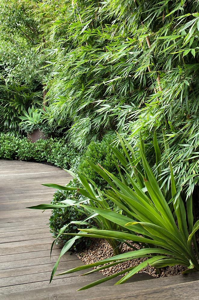 Bambusa textilis 'Gracilis', Doryanthes excelsa, Buxus bodinieri, Rhaphiolepis 'Oriental Pearl'.  Bronte, NSW Australia  Anthony Wyer + Associates  http://www.anthonywyer.com