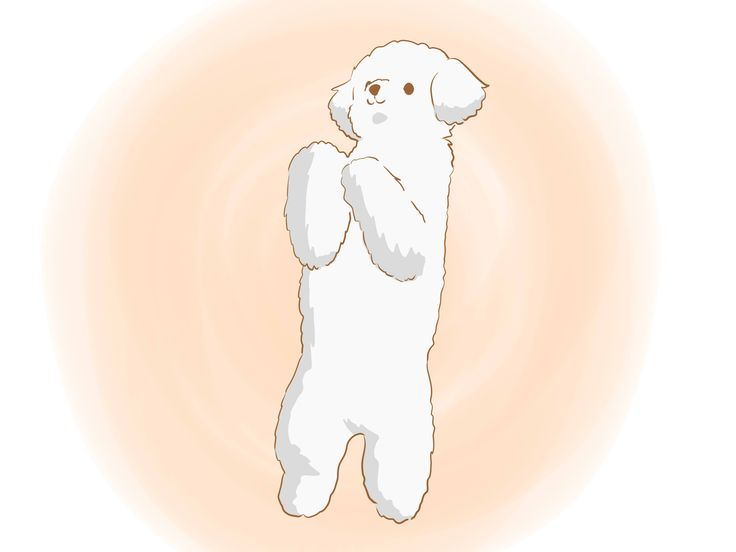 Bichon Frises are highly trainable dogs who are driven by a desire to please their owners. However, for housebreaking especially, Bichons can be stubborn and difficult to train. A combination of consistency, dedication, and positive...