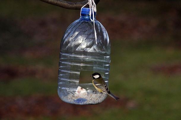 Karmnik dla ptaków