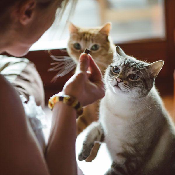 Canna-Pet™ for Cats - CURA L'EPILESSIA E AUMENTA LE DIFESE IMMUNITARE.
