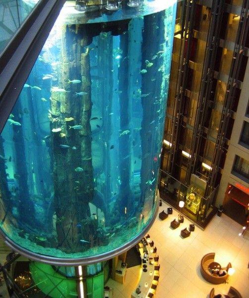 21 best big fish tanks images on pinterest for Big fish tanks