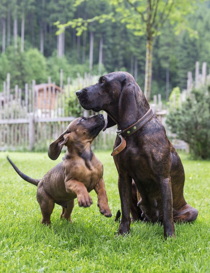 Urlaub mit Hund // Holidays with dog