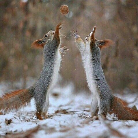 Ardillas en la nieve