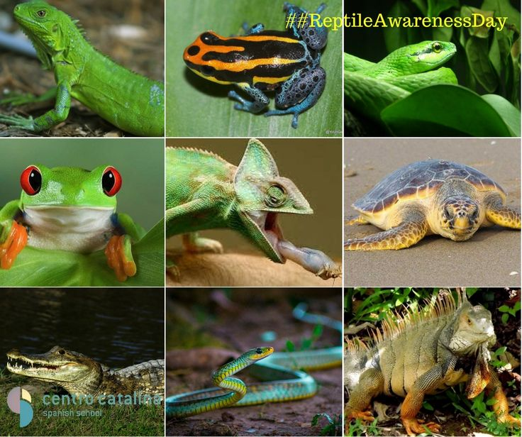 Today is #ReptileAwarenessDay.... What is your favorite Colombian reptile? 🐸 🐍 🦎 🐢