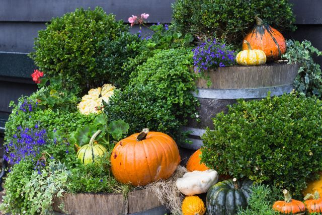 Even if you don't live next to a bunch of great color-changing foliage, that doesn't mean you can't work with what you got! This simple scene features adorable potted plants and plenty of pumpkins. This just goes to show that as long as you've got that master of fall, the pumpkin, you can pretty much get as creative as you want.