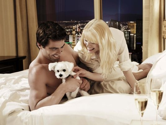 Best Pet Friendly Hotels In Las Vegas