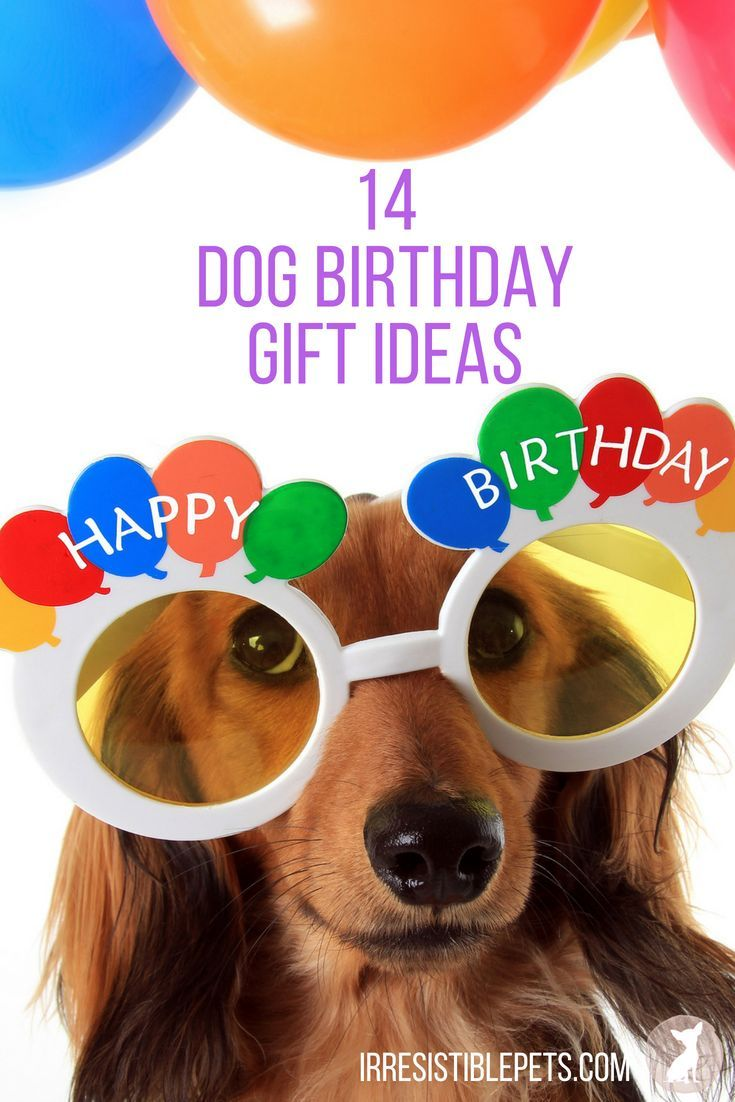 What Do You Buy A Dog For Their Birthday Here Are 14 Gift Ideas The Pet Parent That Treats Like Family