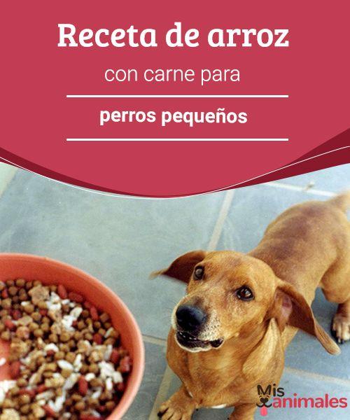 Receta de arroz con carne para perros pequeños - Mis animales Si estás evaluando la opción de darle una alimentación natural y casera a tu mascota, te presentamos una receta de arroz con carne para perros pequeños.