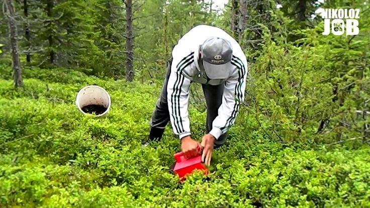 Где можно заработать летом? Сбор черники в Финляндии - это отличная возможность и заработать и отдохнуть. В данном видео мы покажем одну из технологий сбора ...