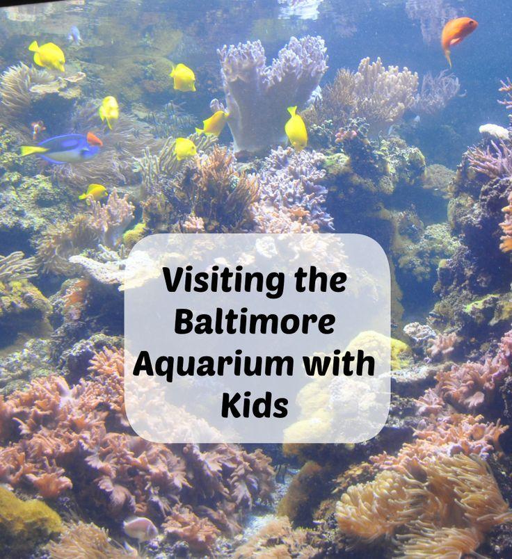 Visiting the baltimore aquarium with kids baltimore for Aquarium washington dc