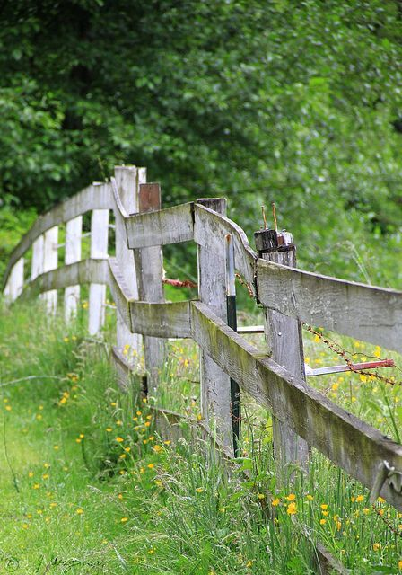 love old fences........wildlife corridors for foxes.......