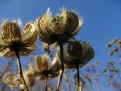 10 Unusual Plant And Seed Catalogs To Brighten The Winter Season