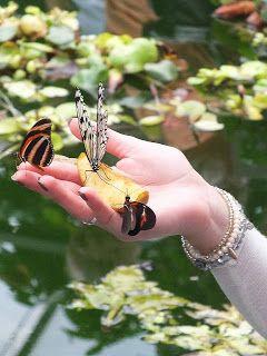 Tier-Fotografien in der freien Natur von Günter Fischer: Schmetterling 1