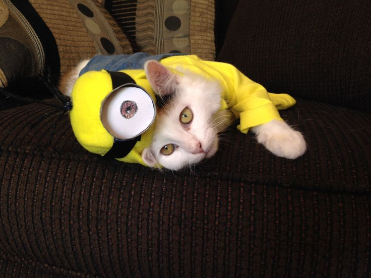This cat dressed up as a minion for Halloween is just too cute.